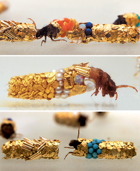 Hubert Duprat's Caddis Larvae